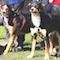 Eine Software hilft in Niedersachsen, die gesetzlichen Verpflichtungen beim Halten von Hunden zu verwalten.