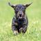 Unbeschwerter spazierengehen: Interaktives Online-Portal informiert Berliner Hundebesitzer über Giftköderfunde.
