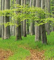 Sachsenforst informiert online zu Fragen der Waldbewirtschaftung.