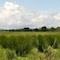 Das Land Baden-Württemberg erprobt, wie sich die Nachhaltigkeit für das Biosphärengebiet Schwäbische Alb verbessern lässt.