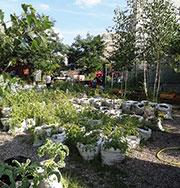 Urbaner Gartenbau in Berlin.