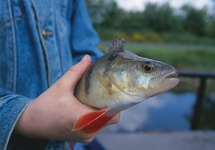 Bayerischen Kommunen stehen die Daten zu Fischereirechten künftig digital zur Verfügung.