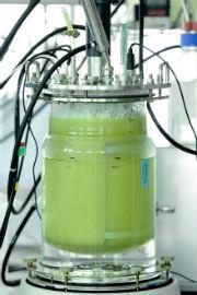 Bioreaktor: Archaeen verwandeln Wasserstoff in Biomethan.