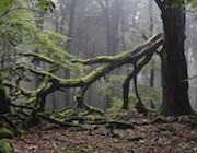 Mängel im Wald lassen sich in Rheinland-Pfalz per Smartphone melden.