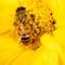 Geodaten-Auswertung hilft Kommunen, passende Flächen zu finden, die als Blühstreifen Bienen Nahrung bieten können.