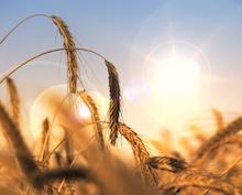 Hessen digitalisiert die Abwicklung der EU-Agrarförderung.