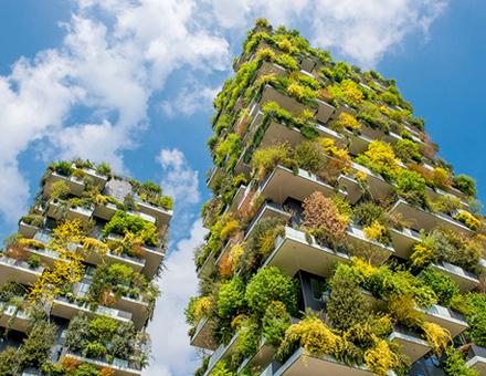 Fassadenbegrünung wirkt sich nicht nur positiv auf das Mikroklima innerhalb eines Quartiers aus, sondern leistet auch einen positiven Beitrag zum Innenraumklima.