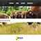 Eines der Portale in neuem Design: Die Website der Stadt Bad Berleburg.
