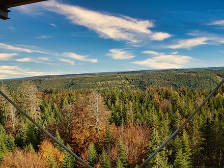 Blick auf den Schwarzwald: Das Land Baden-Württemberg ist mit einer Staatswaldfläche von etwa 320.000 Hektar der größte Waldbesitzer im Land.
