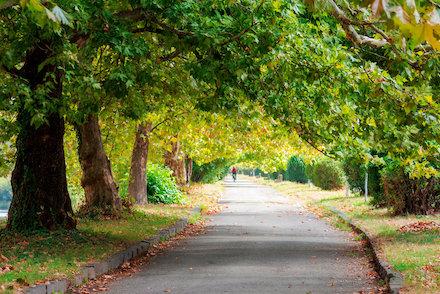 Mit einer smarten Bewässerung lässt sich Trockenstress bei Stadtbäumen einfacher vermeiden.